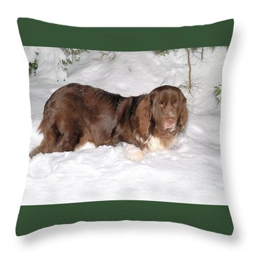 Throw Pillow featuring the photograph Newf In Snow by Debbie Stahre