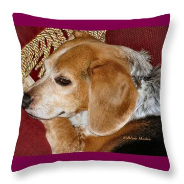 Throw Pillow featuring the photograph Nice N Comfy by KLM Kathel