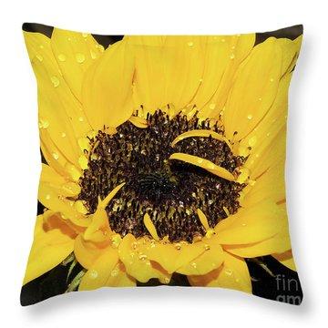 Throw Pillow featuring the photograph Nice Sunflower by Elvira Ladocki