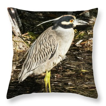 Throw Pillow featuring the photograph Night Heron Standing On A Rock In Key West by Bob Slitzan