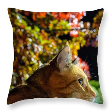 Throw Pillow featuring the photograph Night Stalker by Tikvah's Hope