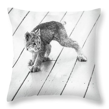 Throw Pillow featuring the photograph Ninja Lynx Kitty Bw by Tim Newton
