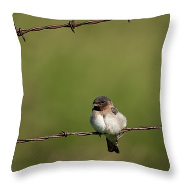 No Boundries Throw Pillow