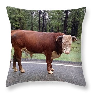 Throw Pillow featuring the photograph No Bull by Roberta Byram
