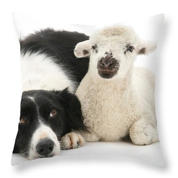 No Sheep Jokes, Please Throw Pillow
