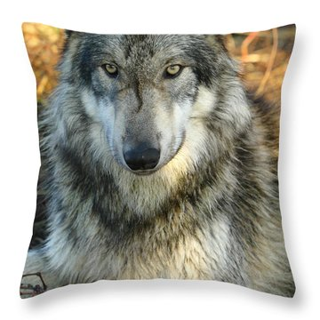Throw Pillow featuring the photograph Noble Lupine by Shari Jardina