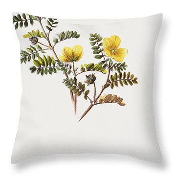 Nohu Flower - Vintage Throw Pillow by Hawaiian Legacy Archive - Printscapes