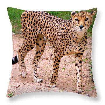 North African Cheetah Throw Pillow
