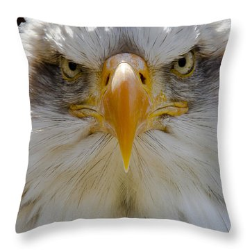North American Bald Eagle  Throw Pillow
