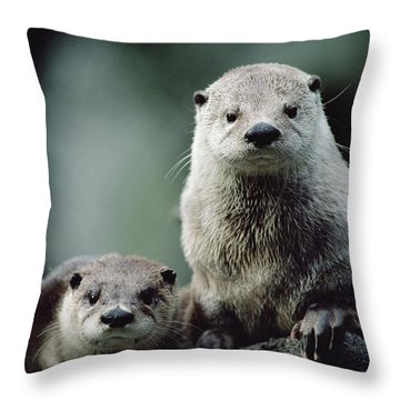 North American River Otter Lontra Throw Pillow by Gerry Ellis