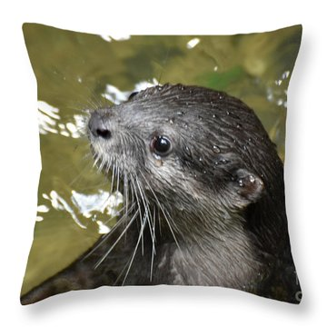 North American River Otter Swimming In A River Throw Pillow