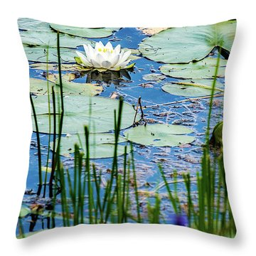 North American White Water Lily Throw Pillow