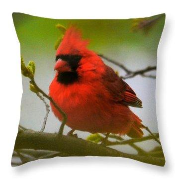 North Carolina Cardinal Throw Pillow