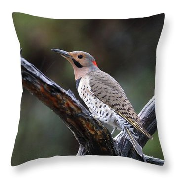 Northern Flicker In Rain Throw Pillow