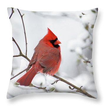 Northern Cardinal - D001540 Throw Pillow