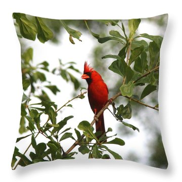 Northern Cardinal - In The Wind Throw Pillow