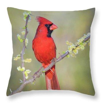 Northern Cardinal Cfh175894 Throw Pillow