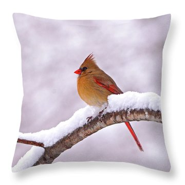 Northern Cardinal In Winter Throw Pillow