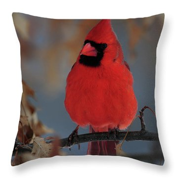 Northern Cardinal Throw Pillow by Mike Martin