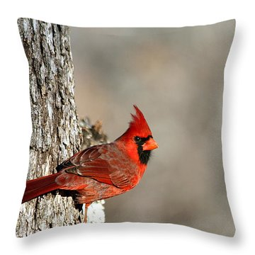 Northern Cardinal On Tree Throw Pillow