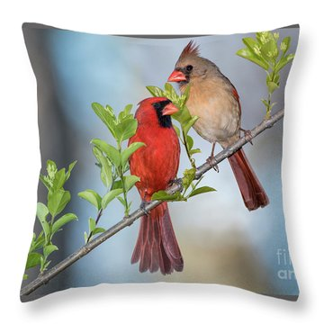 Northern Cardinal Pair In Spring Throw Pillow