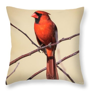 Northern Cardinal Profile Throw Pillow by Ricky L Jones
