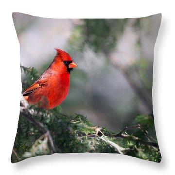 Northern Cardinal Red Throw Pillow