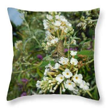 Northern Cloudywing Throw Pillow