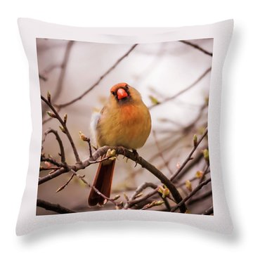 Northern Female Cardinal Pose Throw Pillow by Terry DeLuco