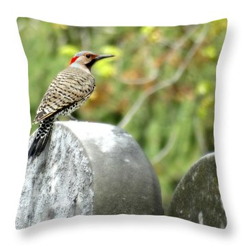Northern Flicker Throw Pillow