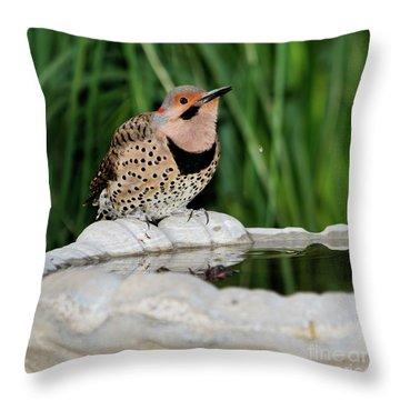 Northern Flicker Drinking Throw Pillow