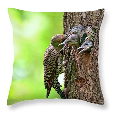 Northern Flicker Family Throw Pillow