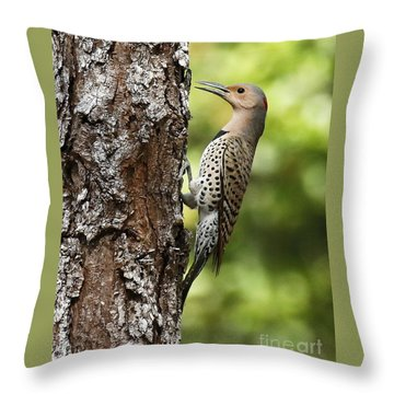 Northern Flicker On The Hunt Throw Pillow