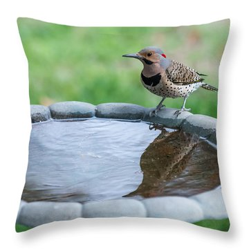 Northern Flicker Reflection New Jersey Throw Pillow