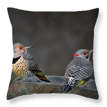 Northern Flickers Square Throw Pillow