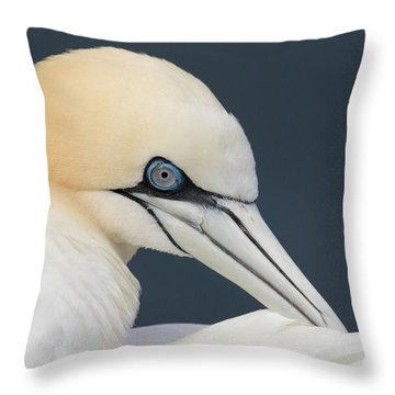 Northern Gannet At Troup Head - Scotland Throw Pillow