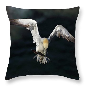 Throw Pillow featuring the photograph Northern Gannet In Flight 2 by Grant Glendinning