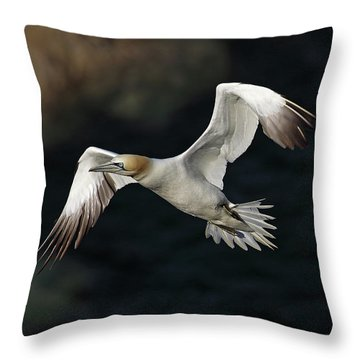 Throw Pillow featuring the photograph Northern Gannet In Flight by Grant Glendinning