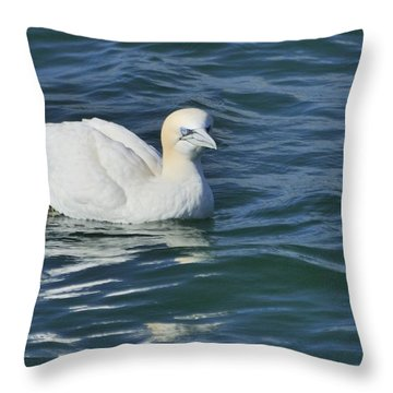 Throw Pillow featuring the photograph Northern Gannet Resting On The Water by Bradford Martin
