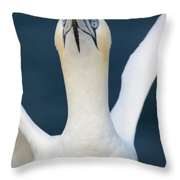 Northern Gannet Stretching Its Wings Throw Pillow