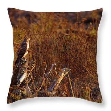 Throw Pillow featuring the photograph Northern Harrier At Sunset by Sharon Talson