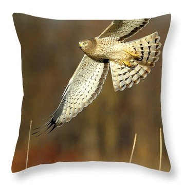 Northern Harrier Banking Throw Pillow