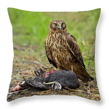 Northern Harrier Throw Pillow by Doug Herr