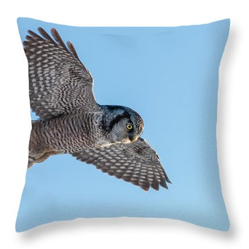 Throw Pillow featuring the photograph Northern Hawk Owl Hunting by Mircea Costina Photography
