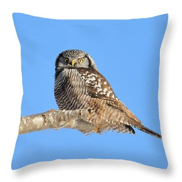 Northern Hawk-owl On Limb Throw Pillow by Debbie Stahre