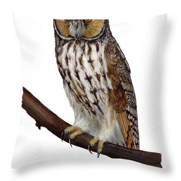 Northern Long-eared Owl Asio Otus - Hibou Moyen-duc - Buho Chico - Hornuggla - Nationalpark Eifel Throw Pillow