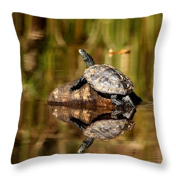 Northern Map Turtle Throw Pillow by Debbie Oppermann
