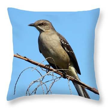 Northern Mockingbird Throw Pillow by Bruce J Robinson