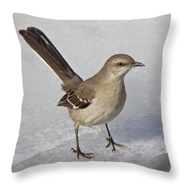 Northern Mockingbird Throw Pillow