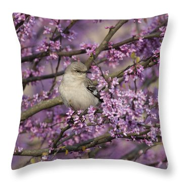 Northern Mockingbird In Blooming Redbud Tree Throw Pillow